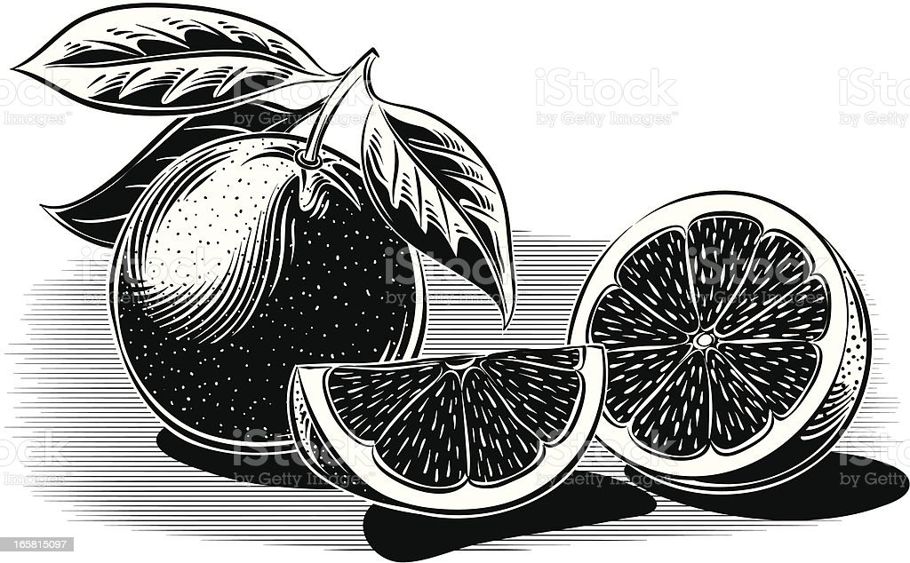 oranges vector art illustration