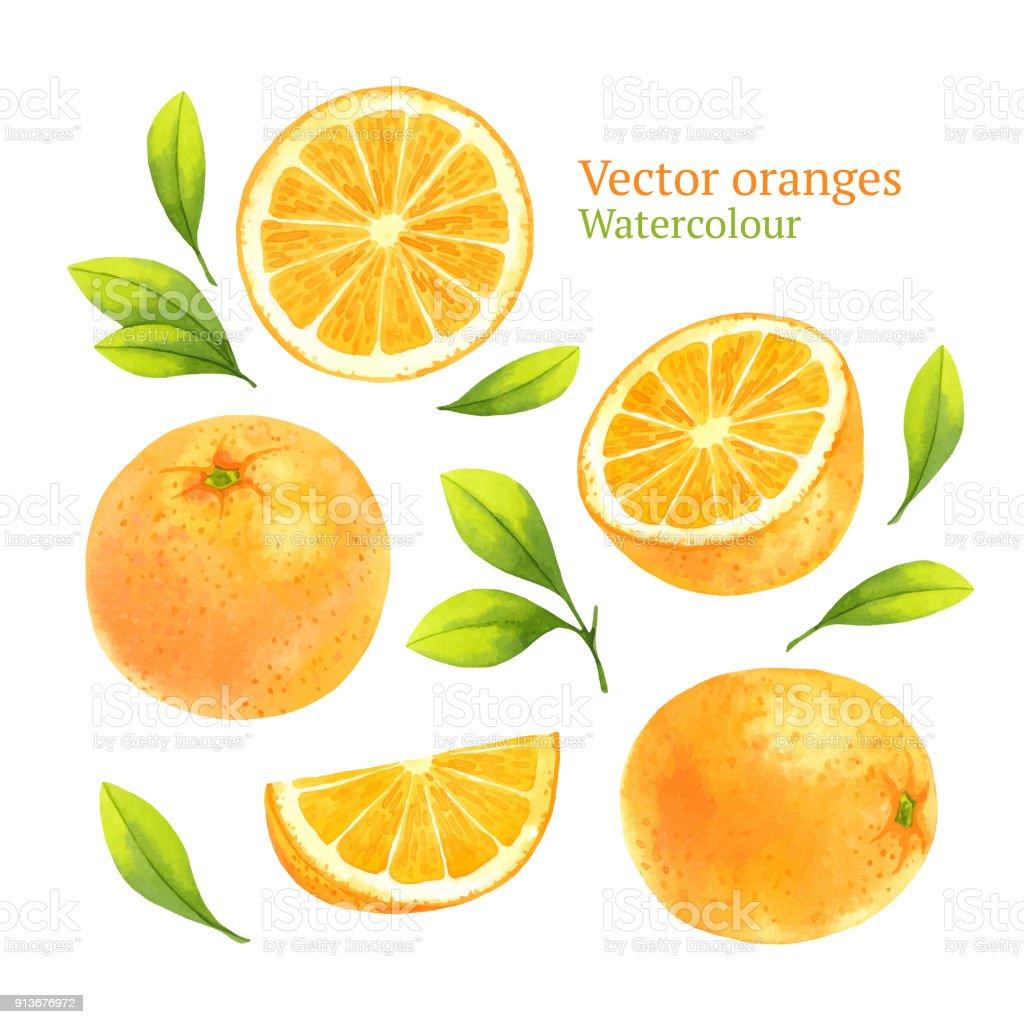 オレンジ ベクターアートイラスト