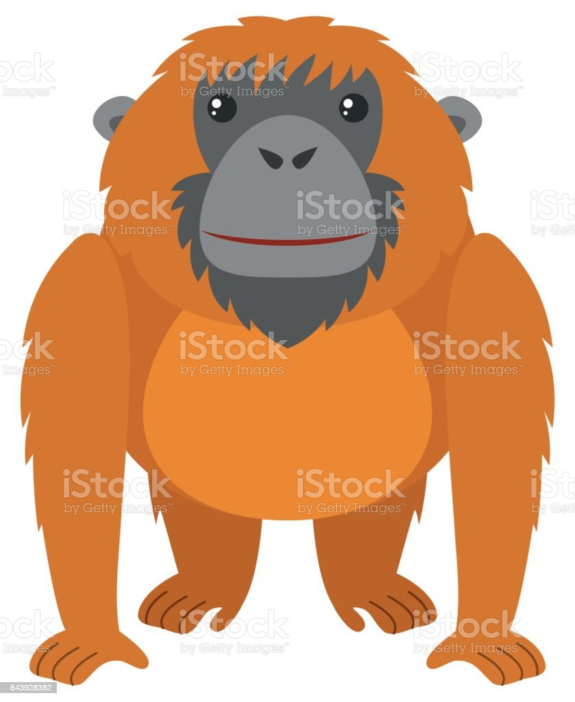 royalty free orangutan clipart clip art vector images rh istockphoto com cute baby orangutan clipart orangutan clipart free