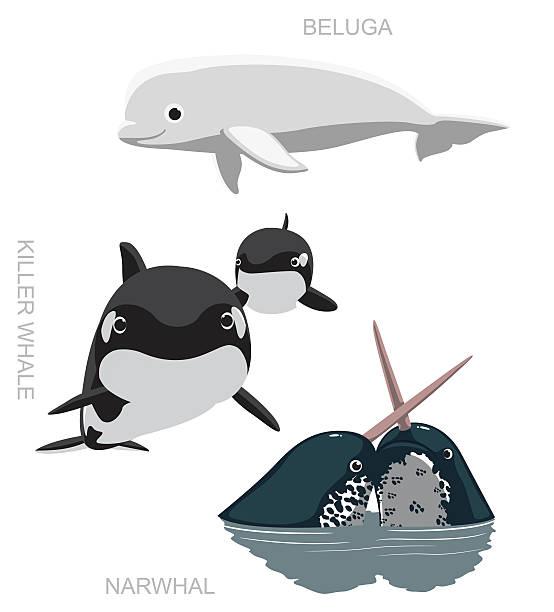 Orca Beluga Narwhal Cartoon Vector Illustration Animal Character EPS10 File Format beluga whale stock illustrations