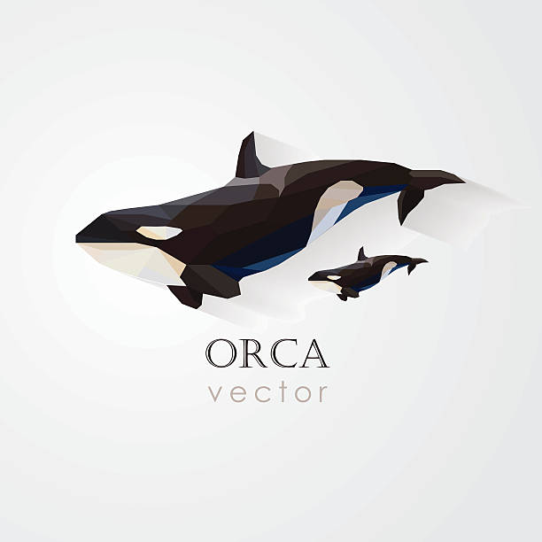 orca killer whale and its baby vector illustration- low poly orca killer whale and its baby vector illustration in low poly geometric style- company visual identity killer whale stock illustrations