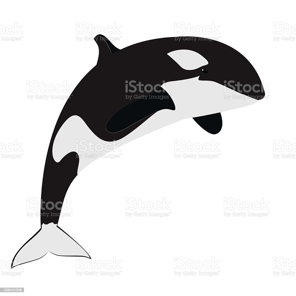 orca killer whale stock vector art 528421208 istock