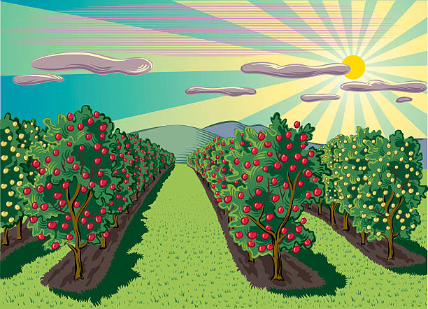 Image result for apple orchard clipart