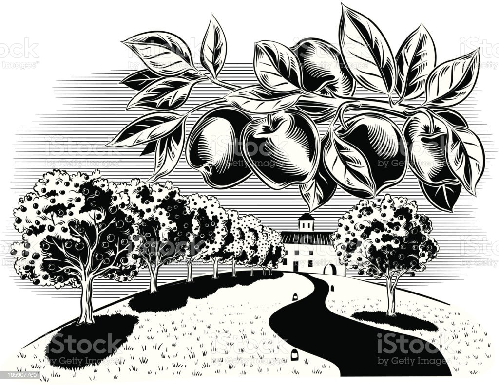 Orchard royalty-free stock vector art