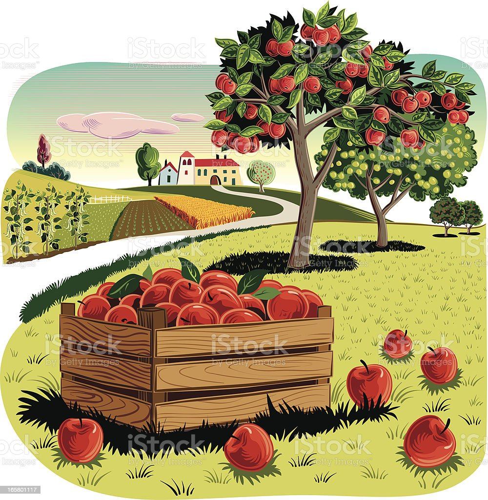 Orchard with Apple crate vector art illustration