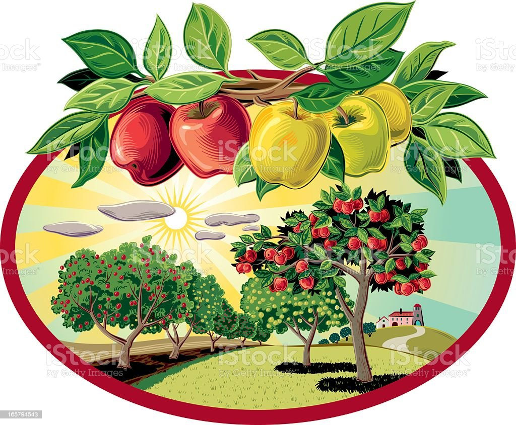 Orchard with branch of Apples vector art illustration