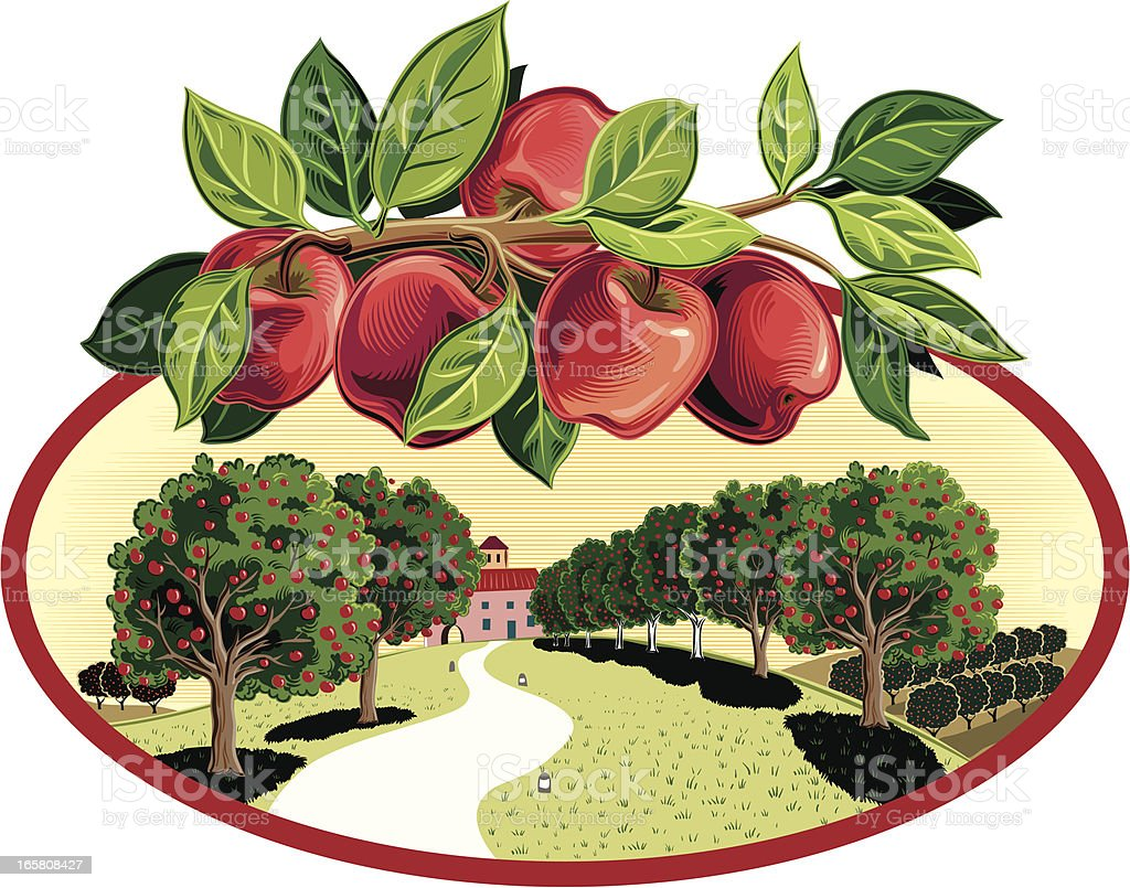 Orchard with branch of Apples royalty-free orchard with branch of apples stock vector art & more images of agriculture
