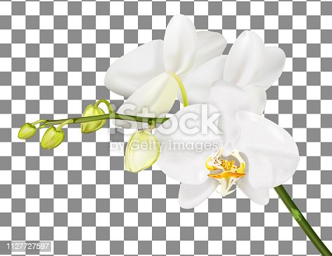 Orchid branch isolated on transparent background. Vector illustration.