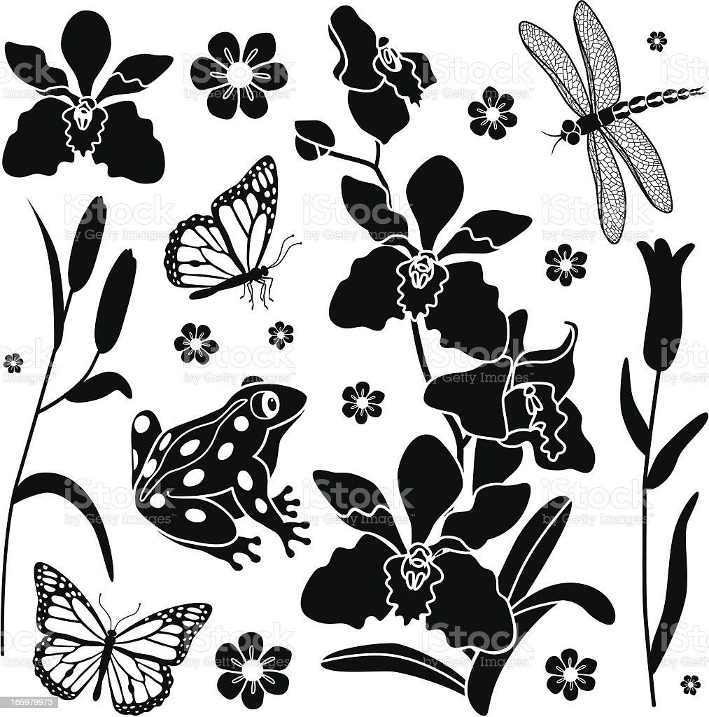 orchid design elements royalty-free stock vector art