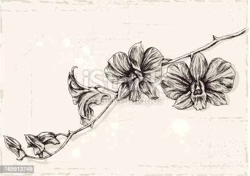 A drawing of orchid flowers on grunge background. Fully vector illustration. The objects are grouped separately so the background can be removed or replaced easily.