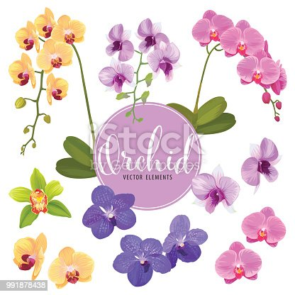 Orchid flower on white background. Vector set of exotic tropical blooming floral for holiday invitations, greeting card and fashion design.