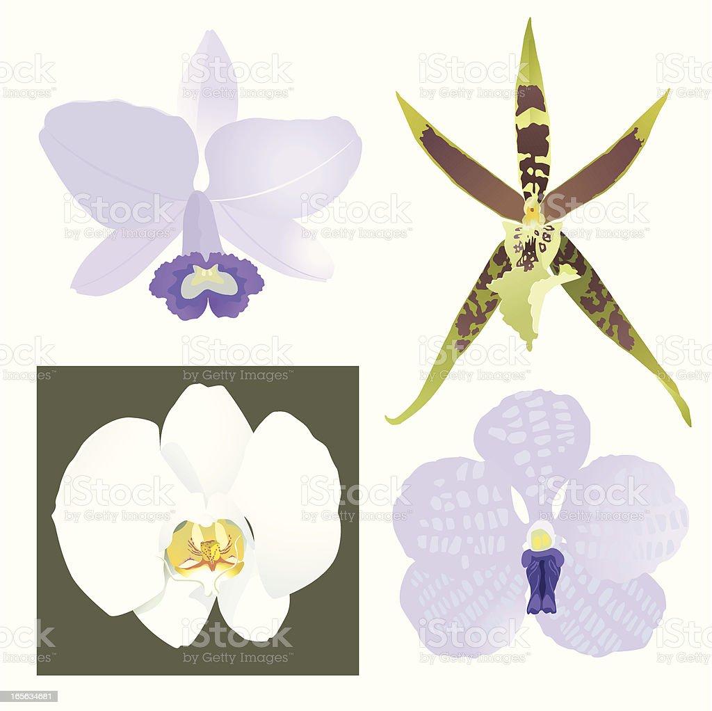Orchideen Kopf orchideen blumen kopf stock vektor und mehr bilder blume