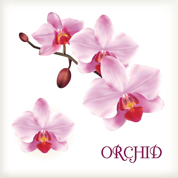 Orchid flowers set Orchid flowers set on the white, vector illustration orchid stock illustrations
