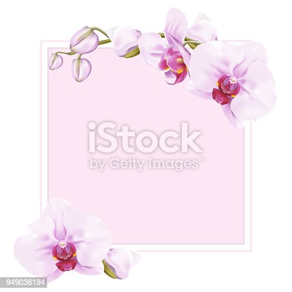 Frame for copy space decorated with sweet pink tropical Phalaenopsis Orchids or Moth Orchid on white background. Vector illustration.