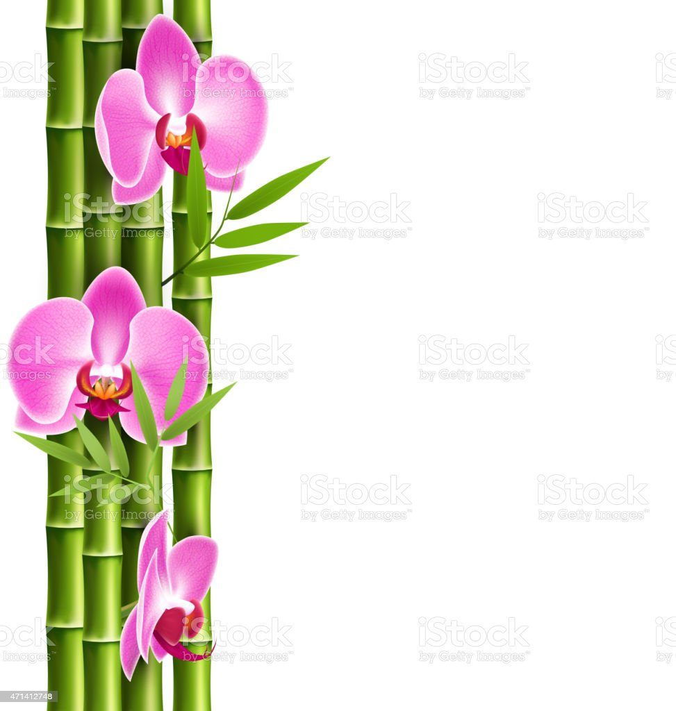 Orchid pink flowers with bamboo isolated on white stok vektr sanat orchid pink flowers with bamboo isolated on white royalty free stok vektr sanat mightylinksfo