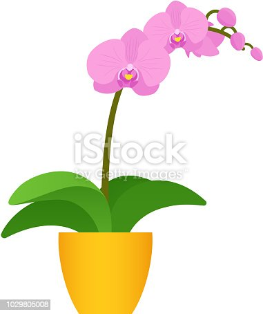 Orchid potted plant in pot. Vector. Indoor flower in flat design isolated on white background. Animated houseplant. Cartoon colorful illustration.