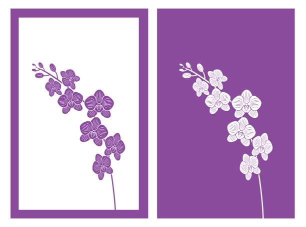 orchid vector isolated orchid flower,vector illustration orchid stock illustrations