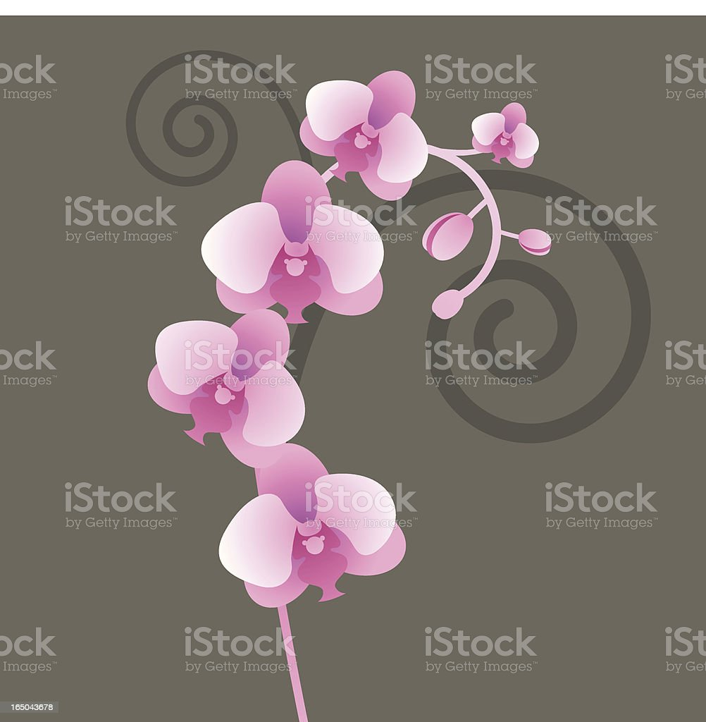 orchid vine royalty-free stock vector art