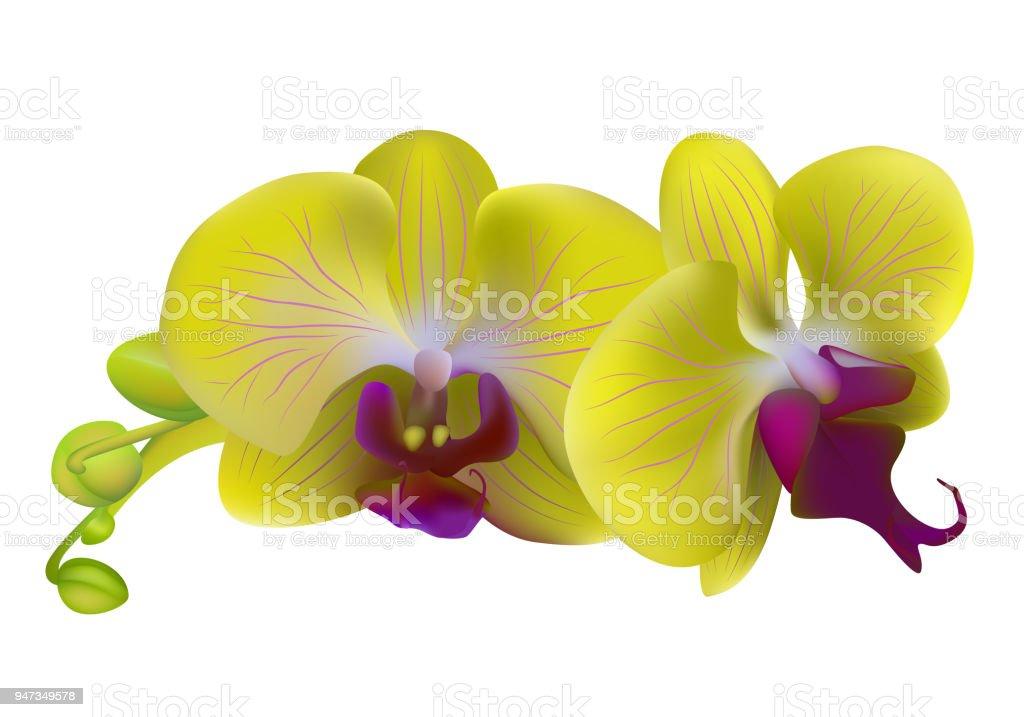 Ilustración de Orquideas Flores Amarillo Plantas Tropicales Aislado ...
