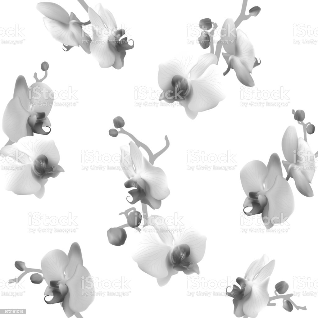 Orchids Seamless Pattern Black And White Tropical Flowers Floral