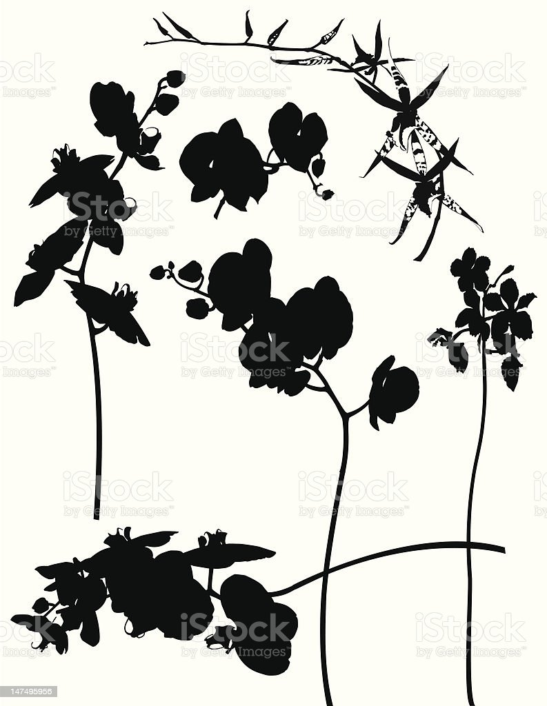 Orchids Silhouette -Design Elements royalty-free stock vector art
