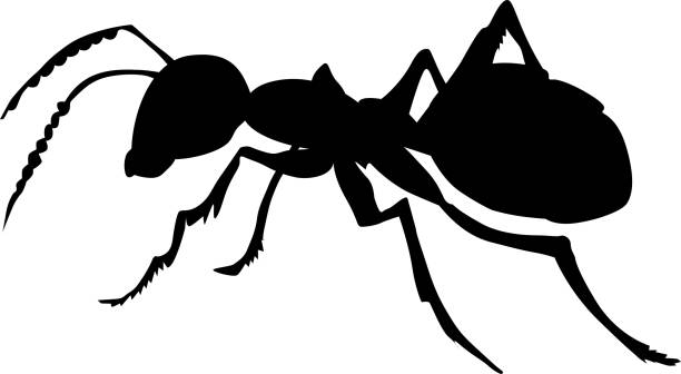 ordinary ant vector art illustration
