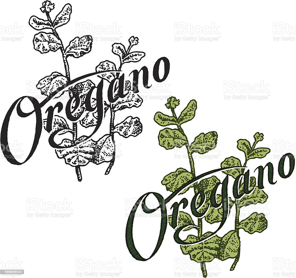 Oregano with Text royalty-free stock vector art