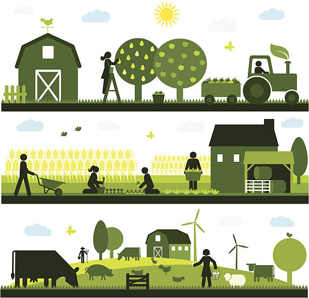 Organic Agriculture Organic agriculture and farming - horizontal design farmer stock illustrations