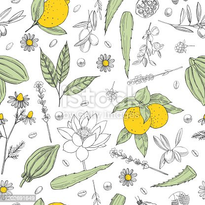 Botanical vector  pattern with hand drawn  plants . Organic cosmetics background.