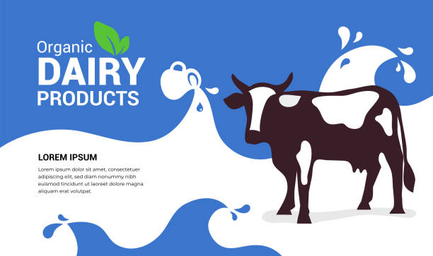 Organic dairy products illustration with cow Vector illustration of organic dairy products with cow, full jug of milky drink,milk waves with drops. Template design for farmers market, banner, booklet, prints, flyer, landing page, website, blog post dairy cattle stock illustrations