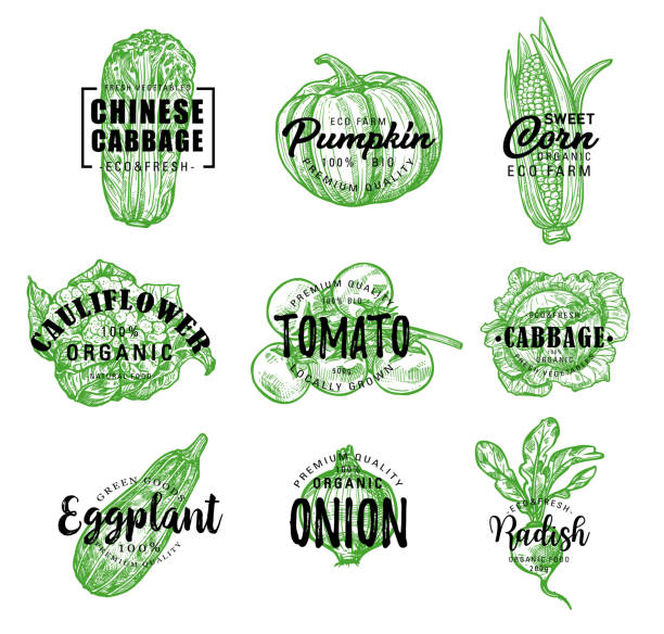 Organic eco farm vegetables vector green lettering Vegetables sketch lettering for farm market or vegetarian and vegan store or cafe. Vector organic Chinese cabbage napa, pumpkin or corn and cauliflower, tomato with eggplant and onion or radish radish stock illustrations