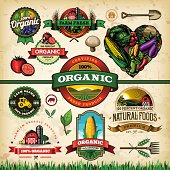 A collection of organic farm fresh labels, badges and illustrations. EPS 10 file, layered & grouped, with meshes and transparencies (shadows & overall effects only).