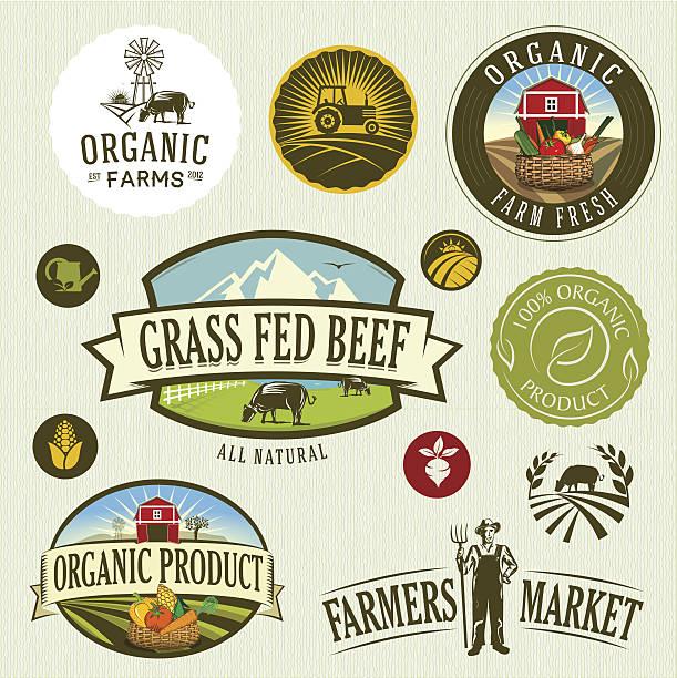 organic & farm organic & farm-vector labels and elements corn crop stock illustrations