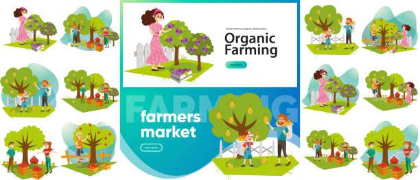ilustrações de stock, clip art, desenhos animados e ícones de organic farming and farmers market set - picking fruit