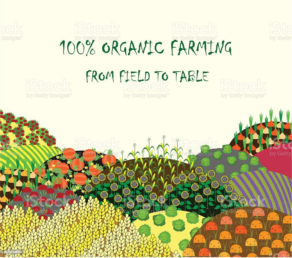 Organic farming background. Frame with plenteous fields landscape. vector art illustration