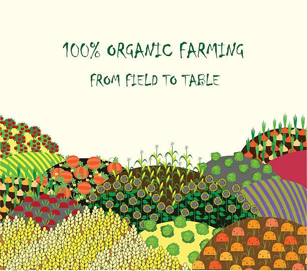 organic farming background. frame with plenteous fields landscape. - herbstgemüseanbau stock-grafiken, -clipart, -cartoons und -symbole