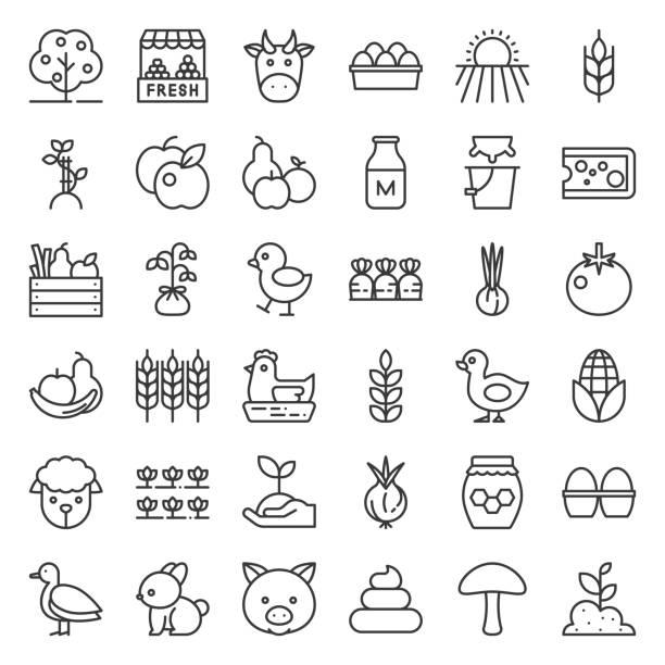 stockillustraties, clipart, cartoons en iconen met biologische landbouw producten pictogram, zoals kip, melk, oranje, tomaat, honing, schapen, eieren, schetsen pictogramserie - chicken bird in box