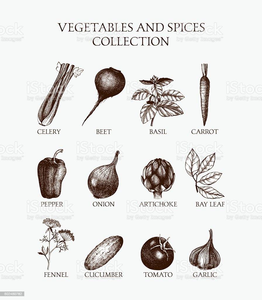 Organic food illustration set vector art illustration