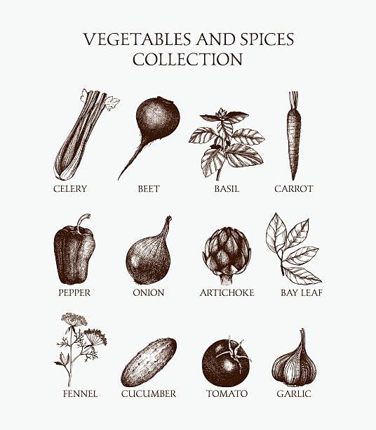 Alimentos orgánicos conjunto de ilustración - ilustración de arte vectorial