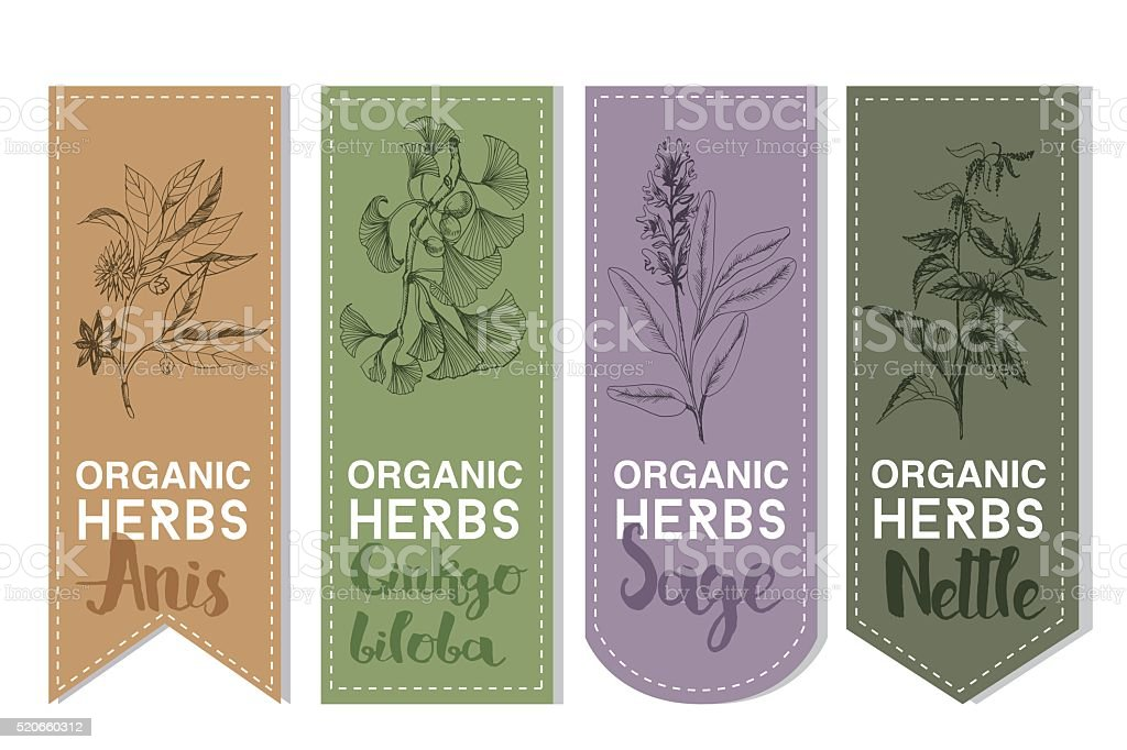 Organic herbs label of anis ginkgo biloba sage nettle vector art illustration