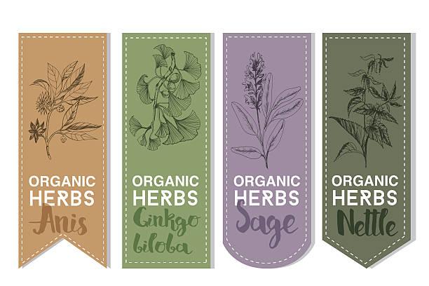 Organic herbs label of anis ginkgo biloba sage nettle vector art illustration