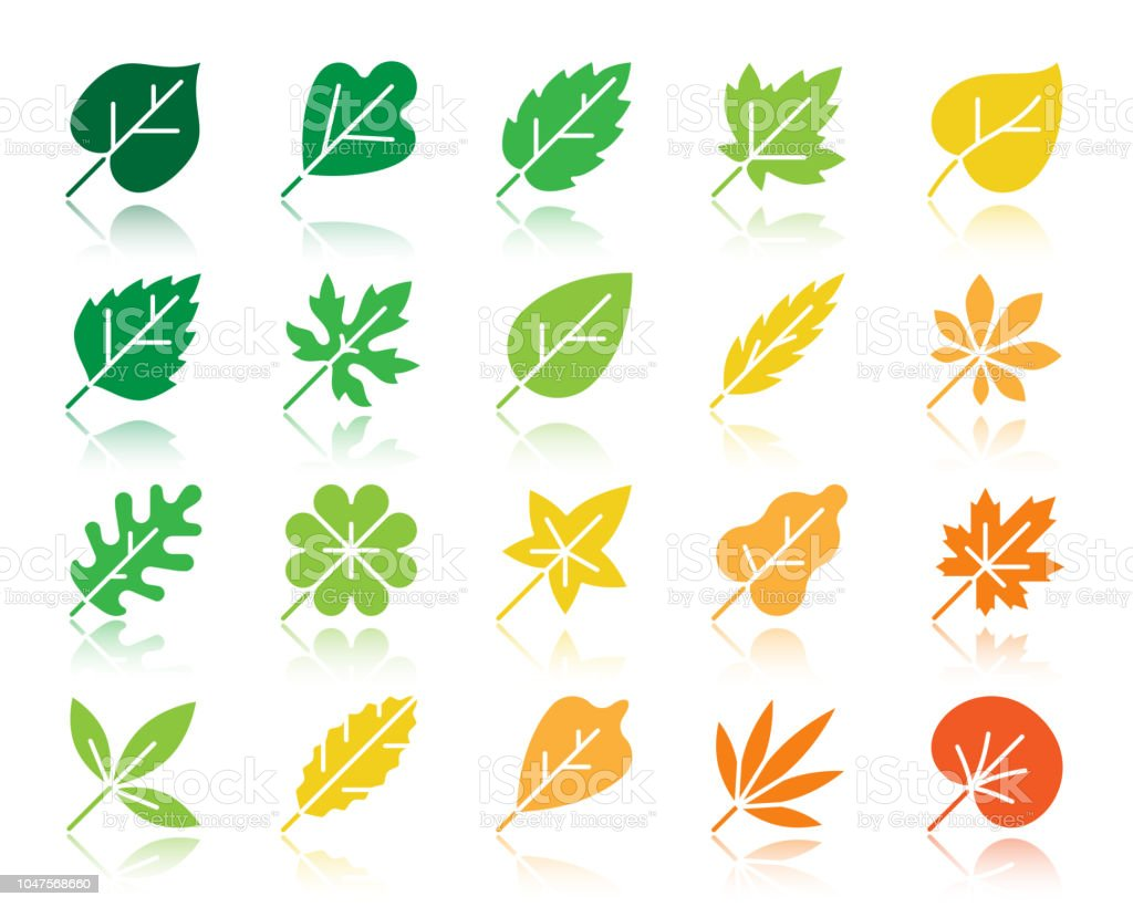Organic Leaf color silhouette icons vector set vector art illustration