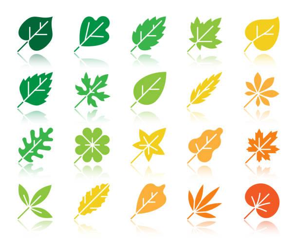 Organic Leaf color silhouette icons vector set Organic Leaf silhouette icons set. Web sign kit of season foliage. Autumn Garden monochrome pictogram plant, elm, eucalyptus. Simple organic leaf contour symbol reflection. Vector Icon shape isolated oak leaf stock illustrations