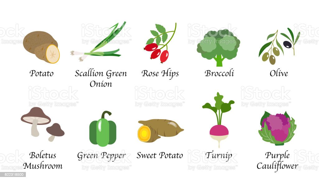 Organic nature health vegetable food spice isolated vector collection set vector art illustration