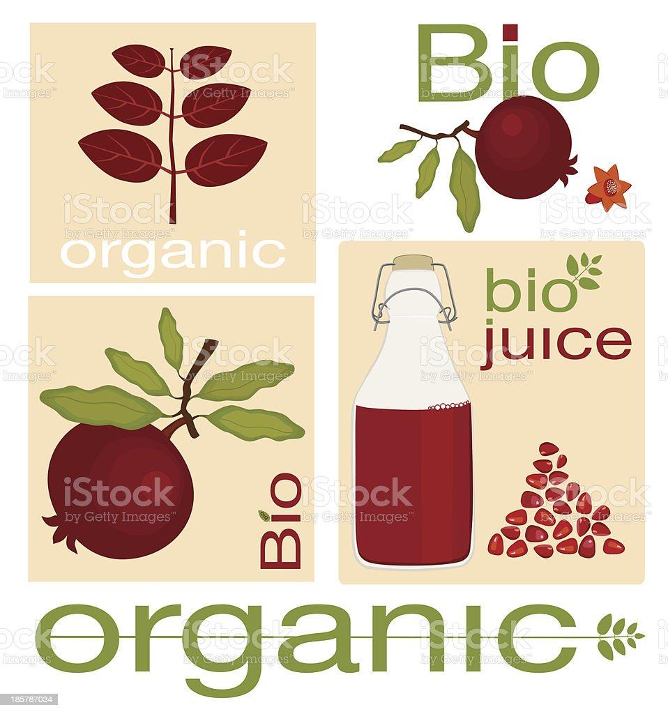Organic Pomegranate Fruit royalty-free organic pomegranate fruit stock vector art & more images of autumn