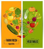 Organic vegetable farming flyers set vector illustration. Locally grown vegetable, vegan retail, natural product. Healthy farm food advertising with pumpkin, beans, onion, peas, tomato, radish, carrot
