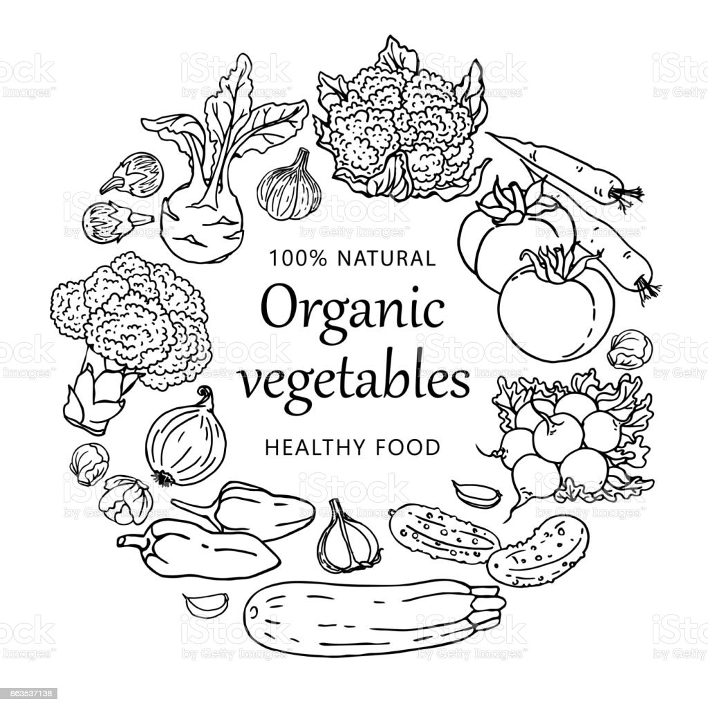 Organic vegetables illustration template isolated on white background. Concept with healthy food vector art illustration