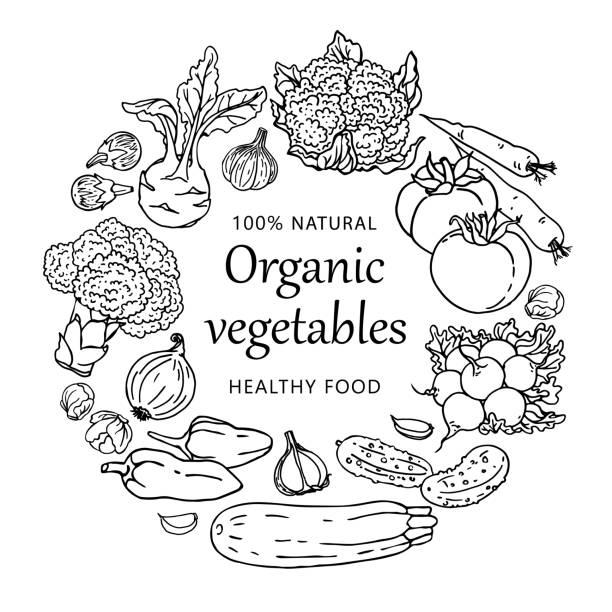 ilustraciones, imágenes clip art, dibujos animados e iconos de stock de plantilla de hortalizas orgánicas ilustración aislada sobre fondo blanco. concepto de comida sana - comida cruda