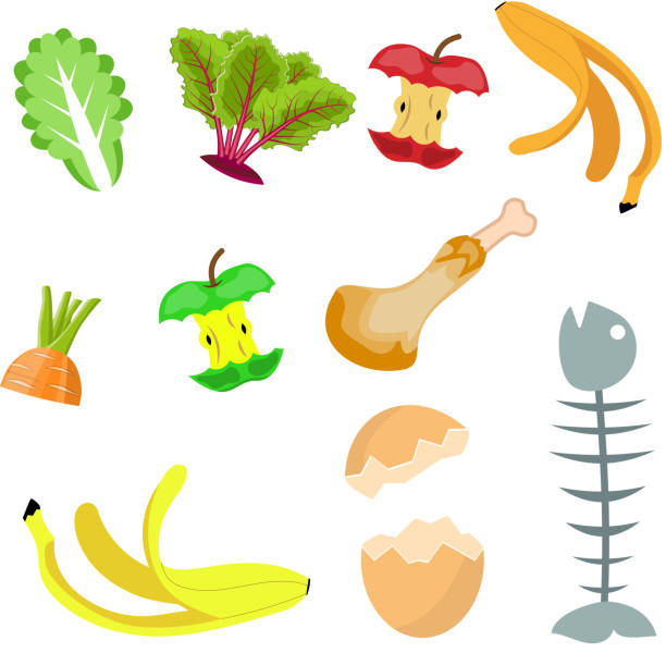 Best Food Waste Illustrations, Royalty-Free Vector ...