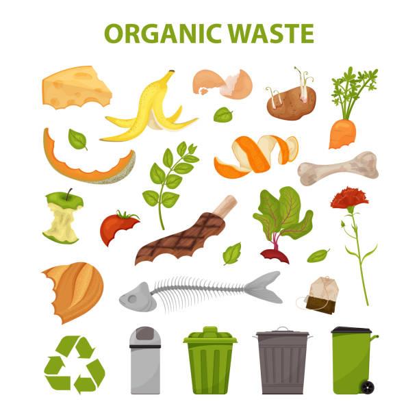 ilustraciones, imágenes clip art, dibujos animados e iconos de stock de residuos orgánicos - leftovers